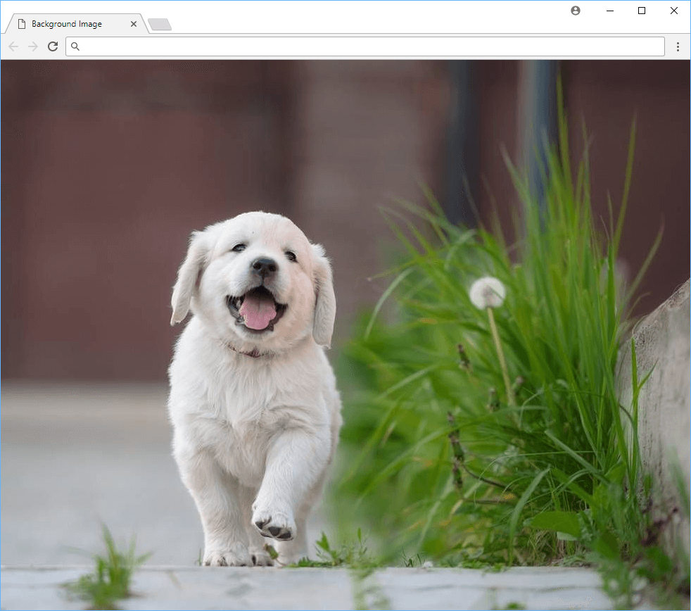 A cute puppy as your background image.